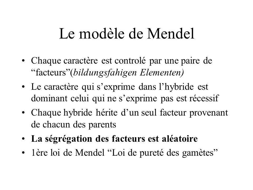 Le modèle de Mendel Chaque caractère est controlé par une paire de facteurs (bildungsfahigen Elementen)