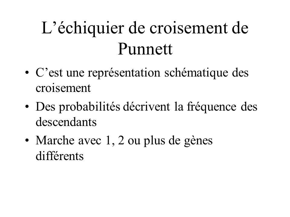 L'échiquier de croisement de Punnett
