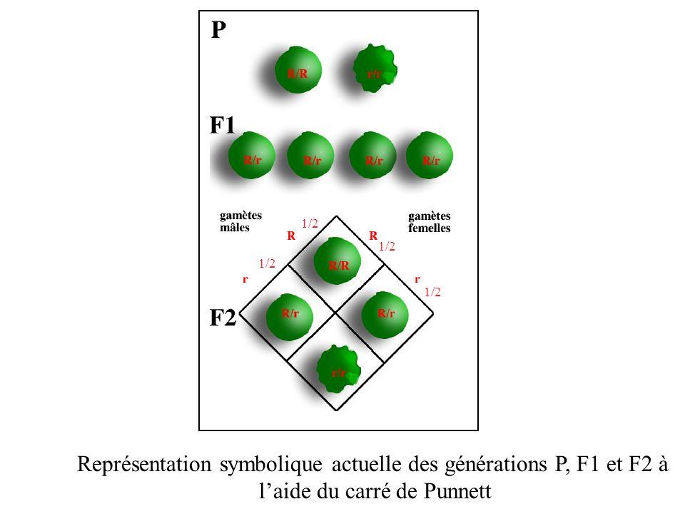 Représentation symbolique actuelle des générations P, F1 et F2 à