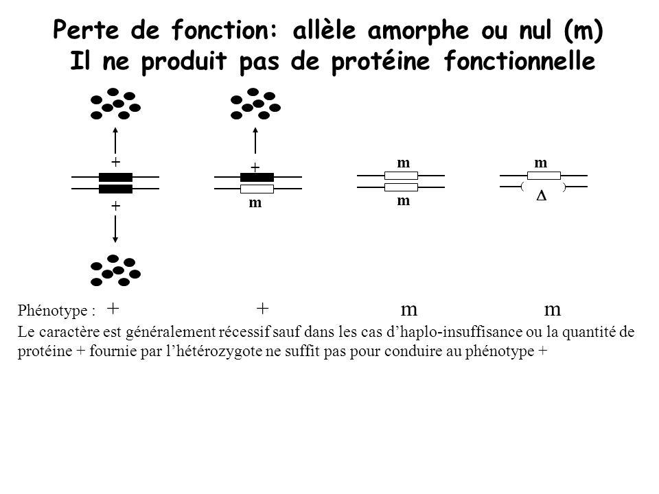 Perte de fonction: allèle amorphe ou nul (m)
