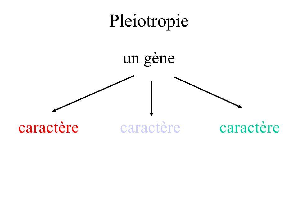 Pleiotropie un gène caractère caractère caractère