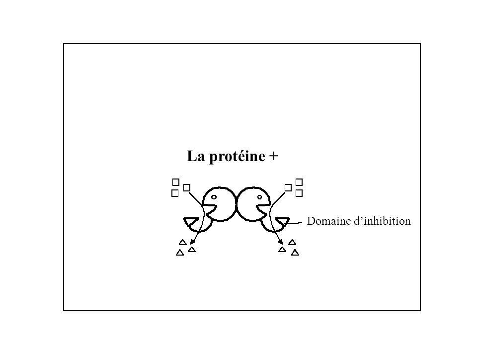 La protéine + Domaine d'inhibition
