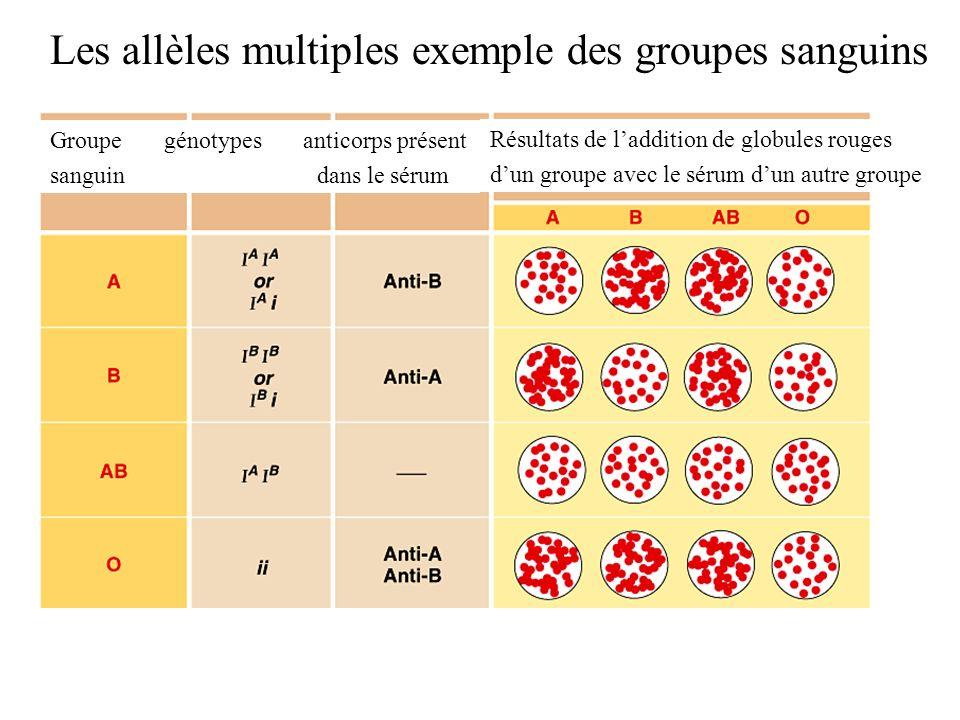 Les allèles multiples exemple des groupes sanguins