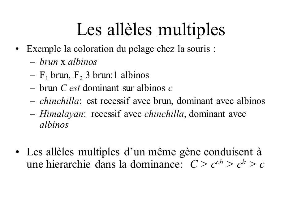 Les allèles multiples Exemple la coloration du pelage chez la souris : brun x albinos. F1 brun, F2 3 brun:1 albinos.