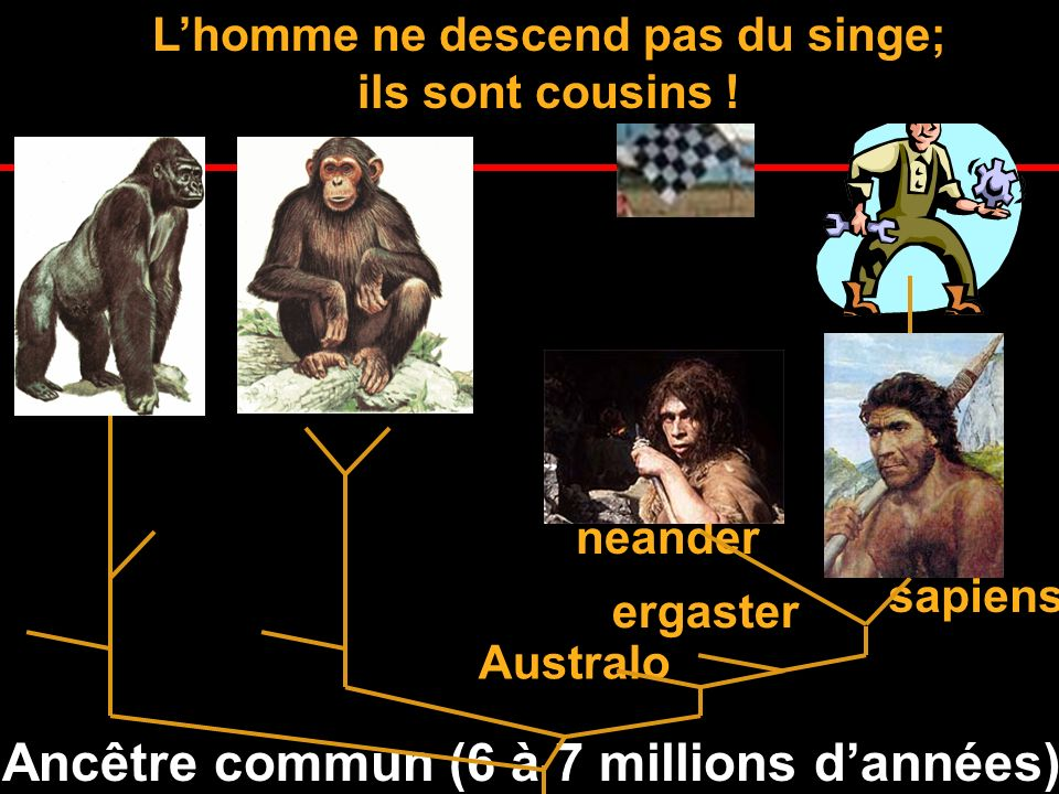 L'homme ne descend pas du singe;