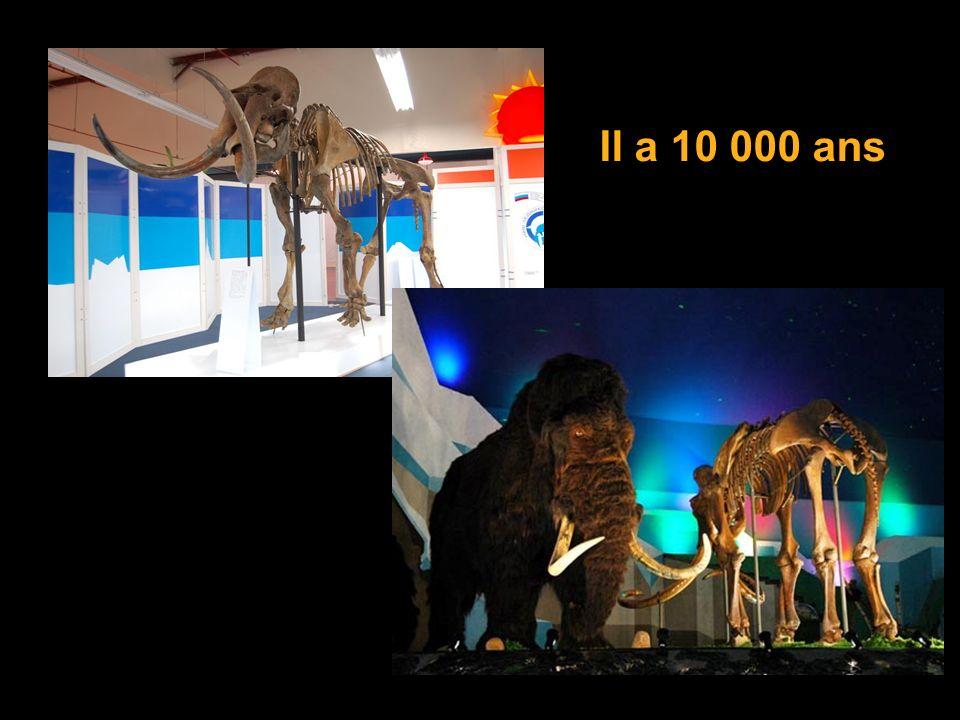Il a 10 000 ans