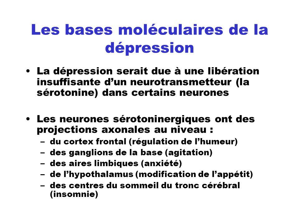 Les bases moléculaires de la dépression