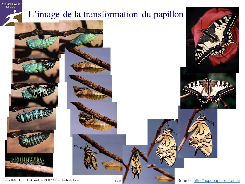 L'image de la transformation du papillon