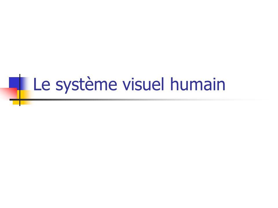 Le système visuel humain