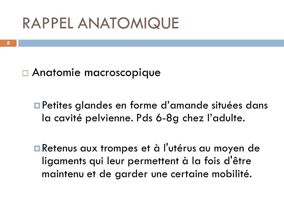 RAPPEL ANATOMIQUE Anatomie macroscopique