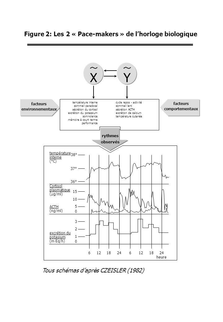 Figure 2: Les 2 « Pace-makers » de l'horloge biologique