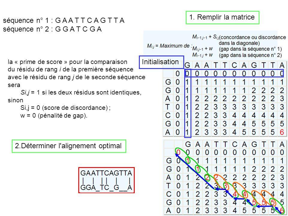 séquence n° 1 : G A A T T C A G T T A séquence n° 2 : G G A T C G A