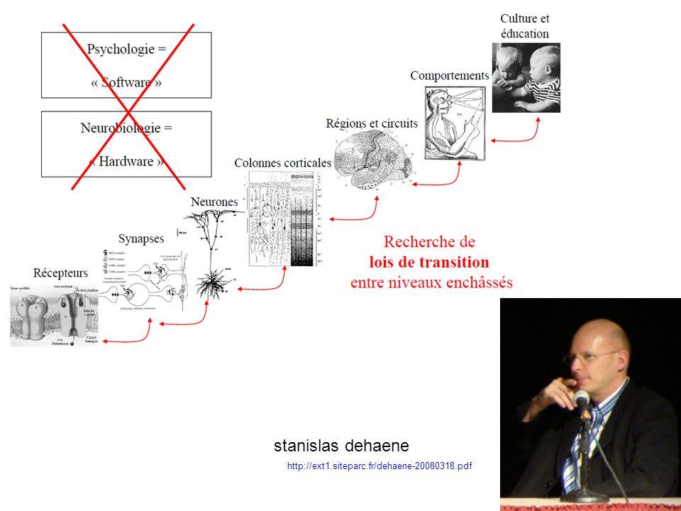 stanislas dehaene http://ext1.siteparc.fr/dehaene-20080318.pdf