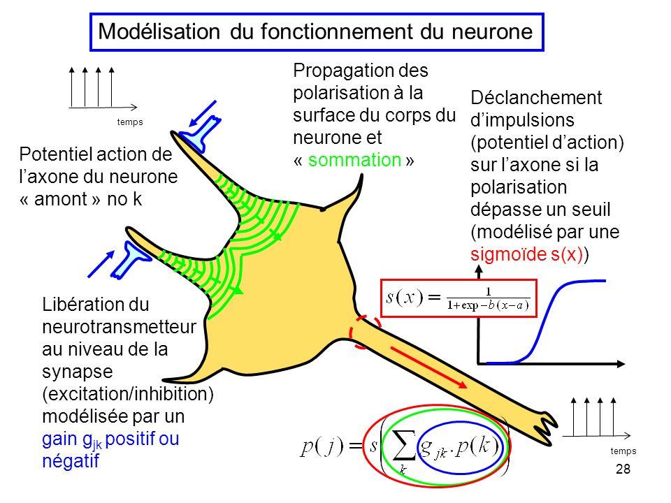 Modélisation du fonctionnement du neurone