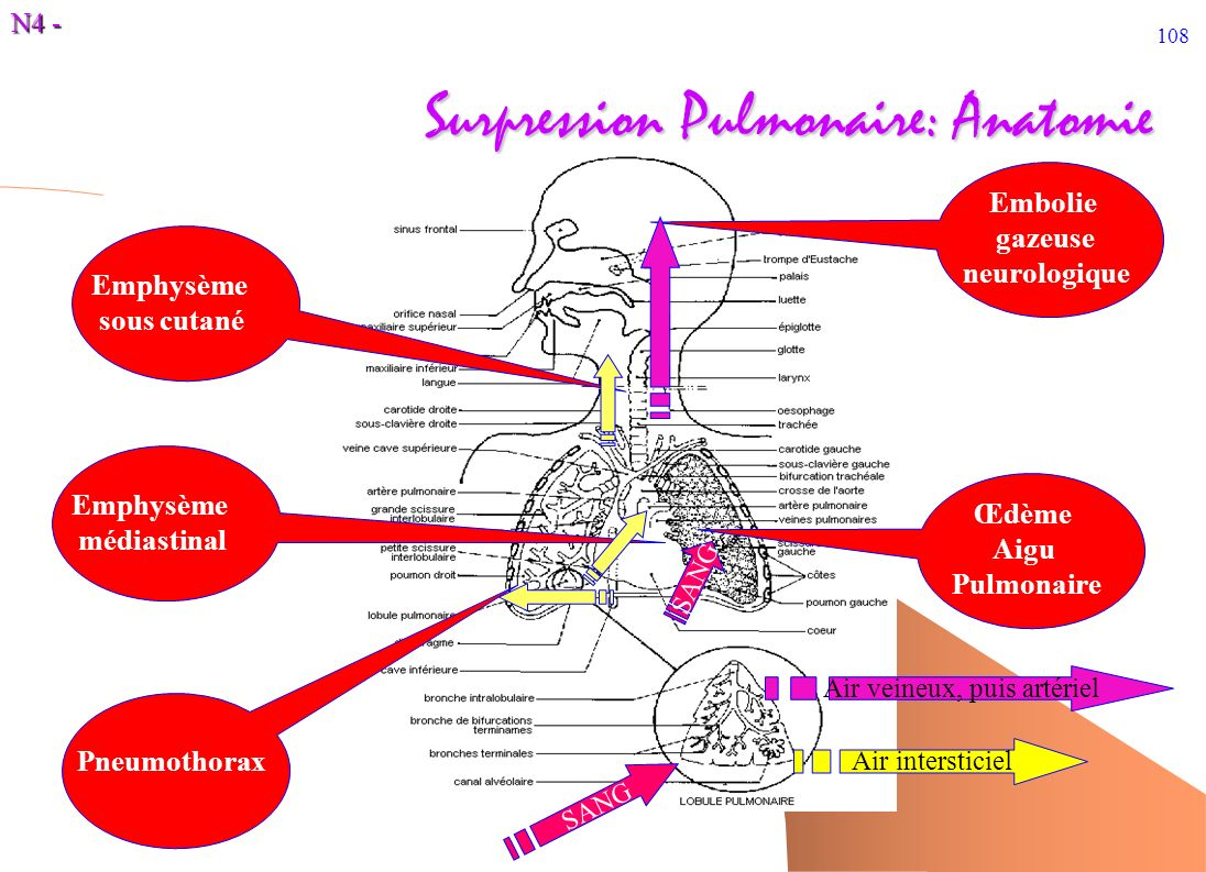 Surpression Pulmonaire: Anatomie