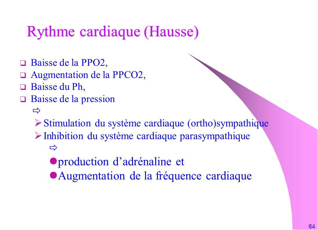 Rythme cardiaque (Hausse)