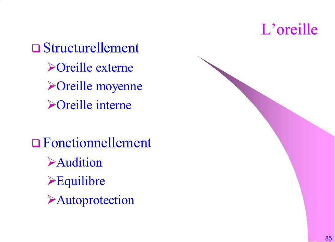 L'oreille Structurellement Fonctionnellement Oreille externe