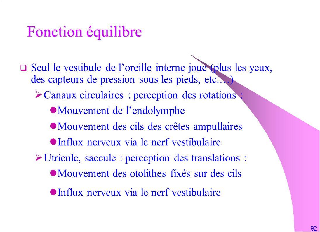 Fonction équilibre Seul le vestibule de l'oreille interne joue (plus les yeux, des capteurs de pression sous les pieds, etc.…)