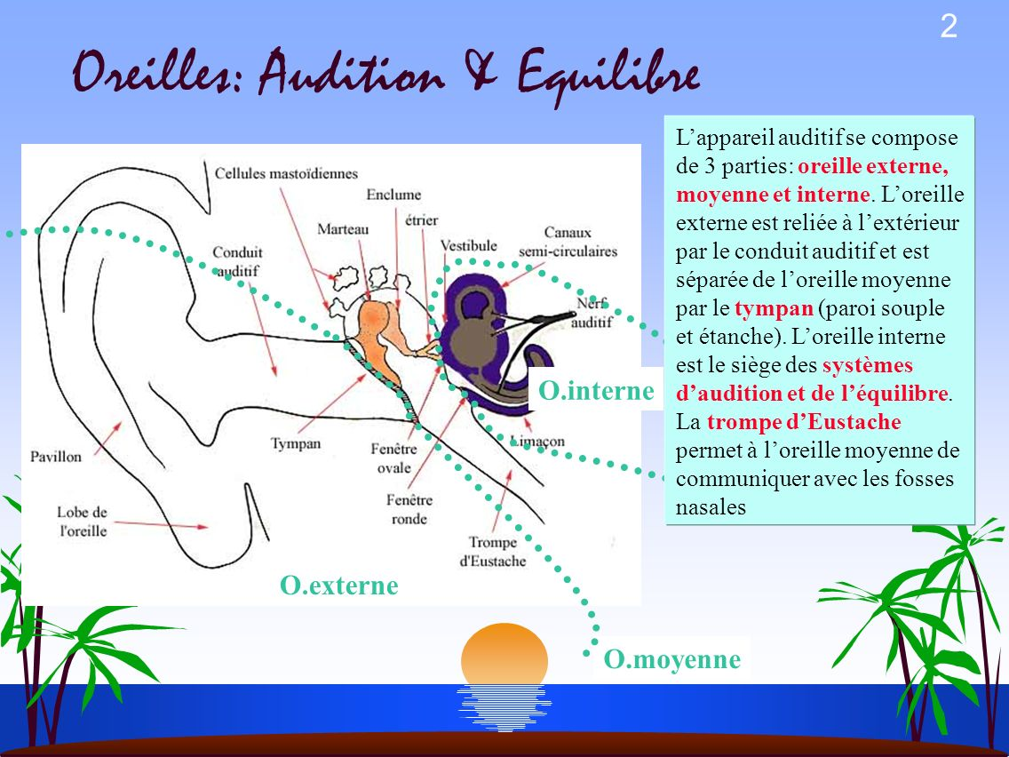 Oreilles: Audition & Equilibre