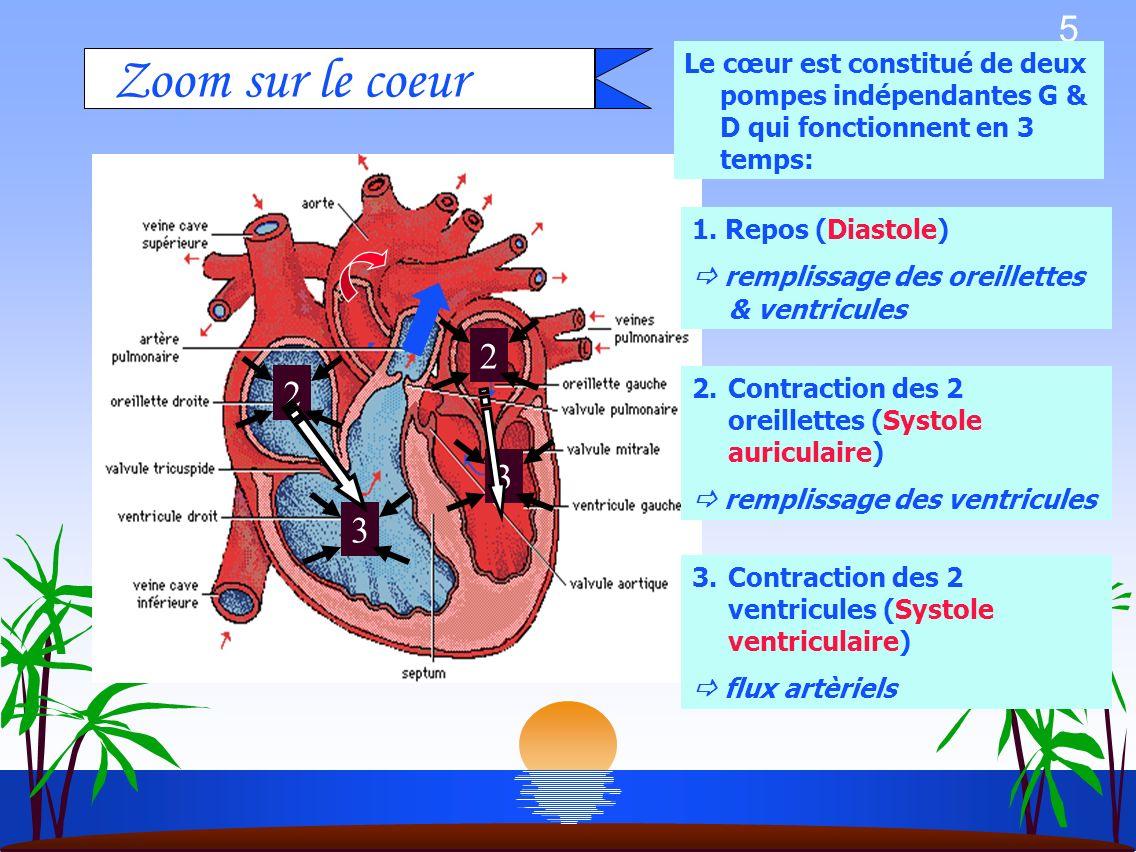 Le cœur est constitué de deux pompes indépendantes G & D qui fonctionnent en 3 temps: