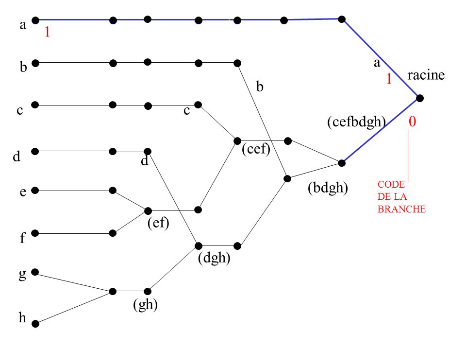 a 1 a b racine 1 b c c (cefbdgh) (cef) d d (bdgh) e (ef) f (dgh) g