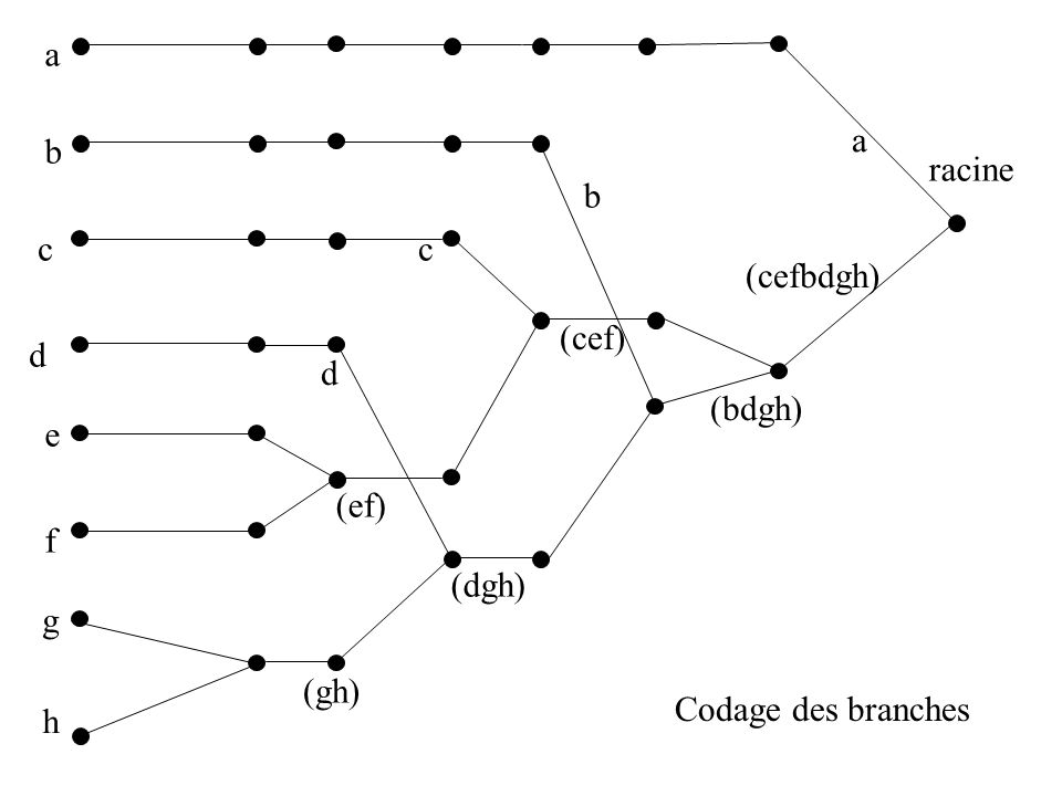 a a b racine b c c (cefbdgh) (cef) d d (bdgh) e (ef) f (dgh) g (gh) Codage des branches h