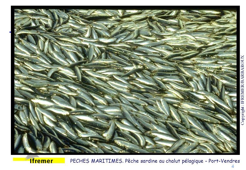 PECHES MARITIMES. Pêche sardine au chalut pélagique - Port-Vendres