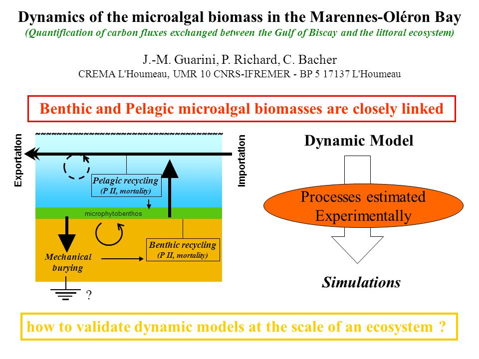 Benthic and Pelagic microalgal biomasses are closely linked