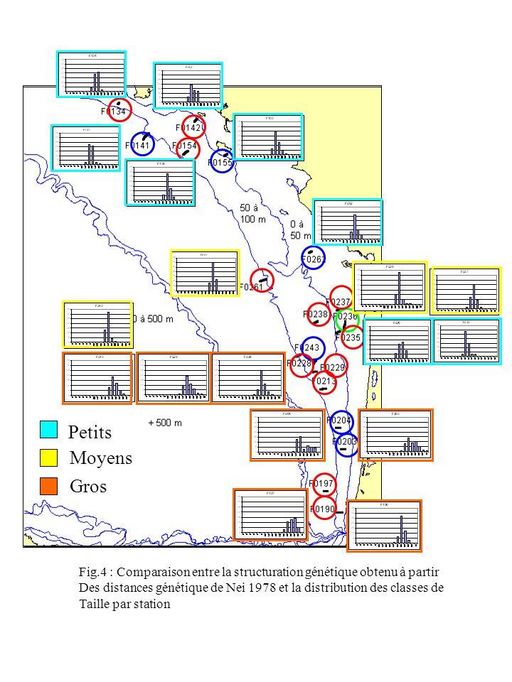 Petits Moyens. Gros. Fig.4 : Comparaison entre la structuration génétique obtenu à partir.