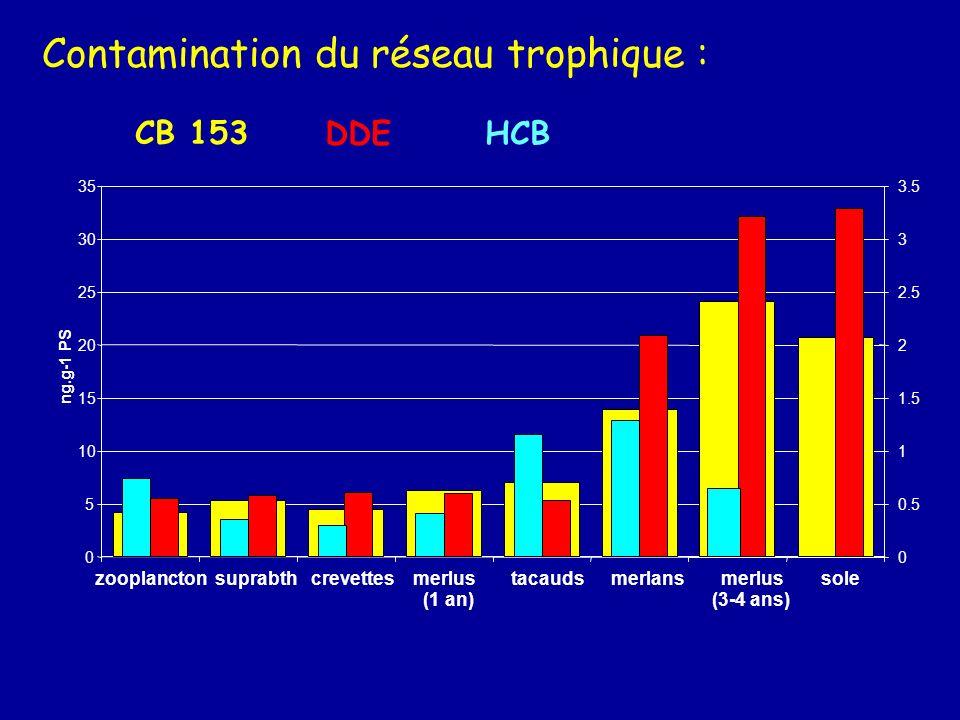 Contamination du réseau trophique :