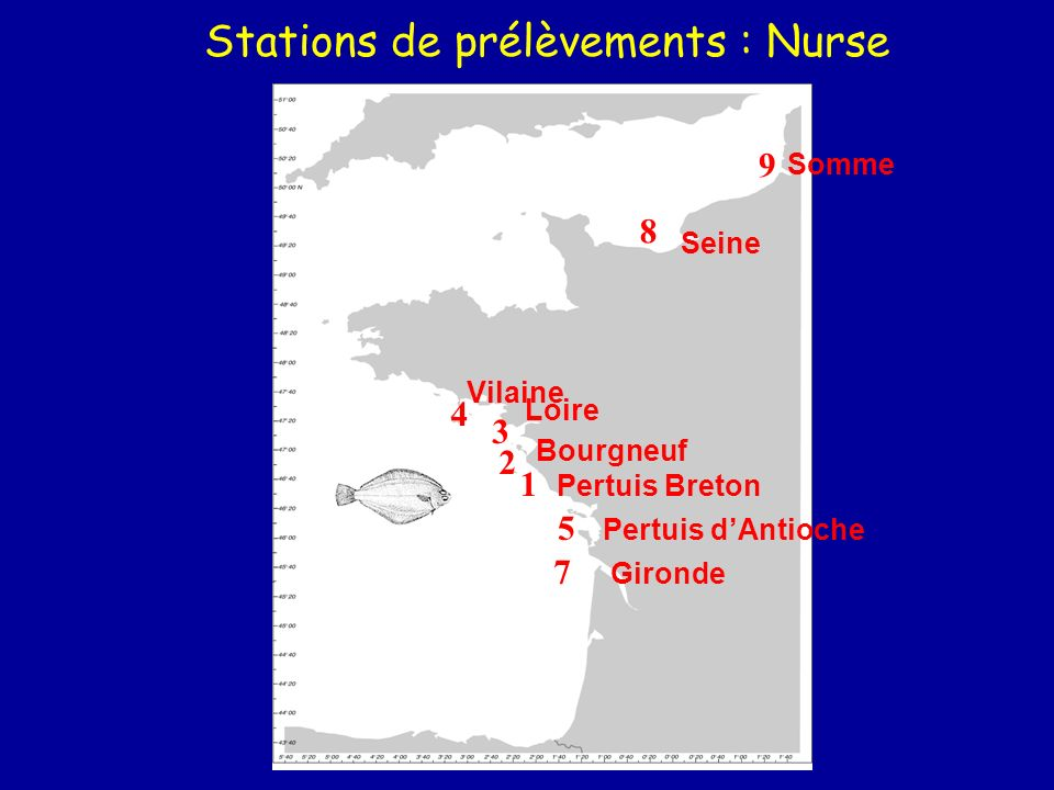 Stations de prélèvements : Nurse