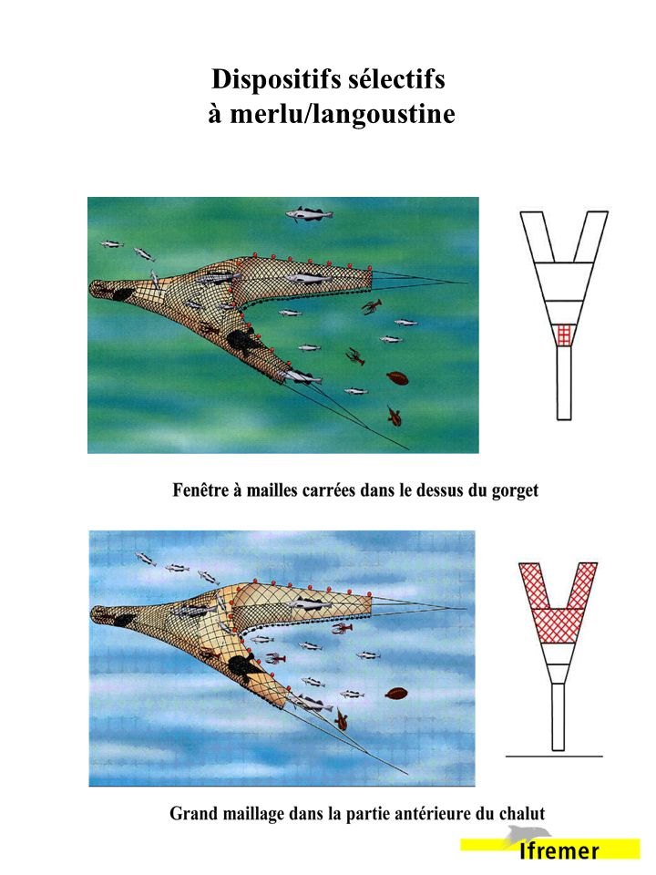 Dispositifs sélectifs à merlu/langoustine