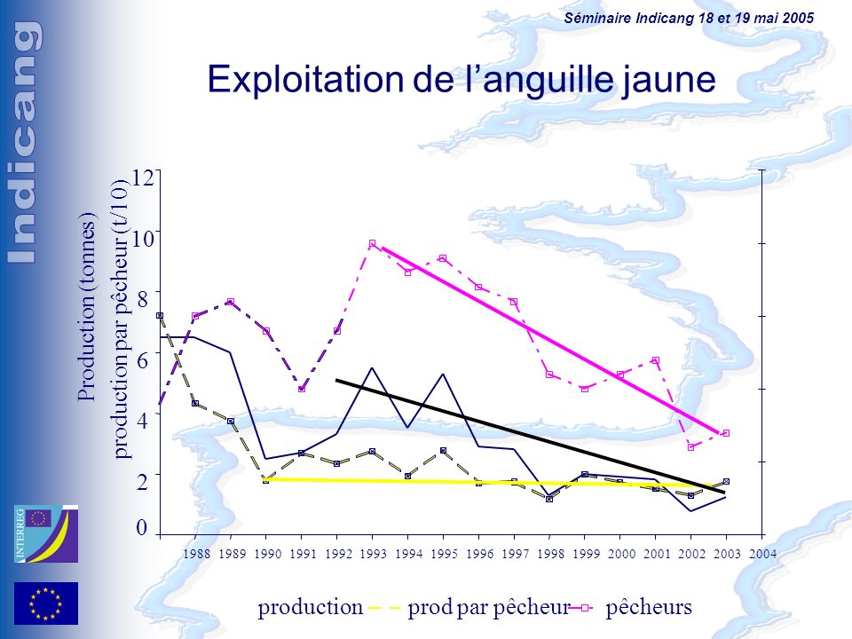 Exploitation de l'anguille jaune