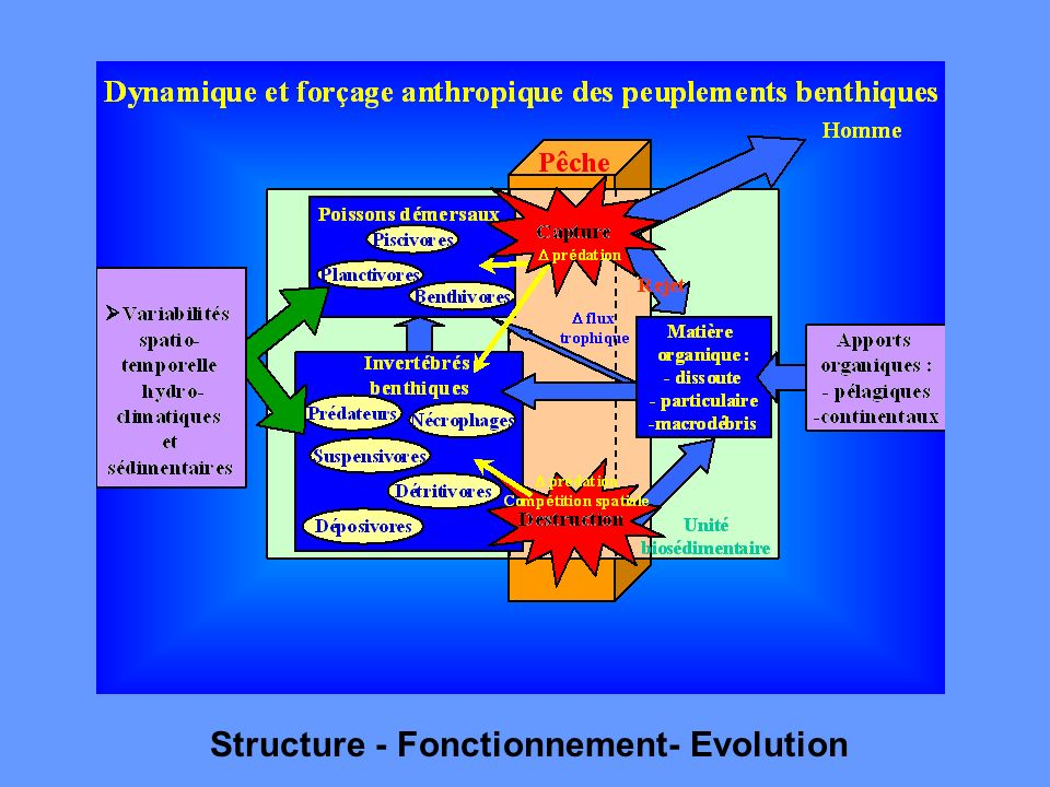 Structure - Fonctionnement- Evolution