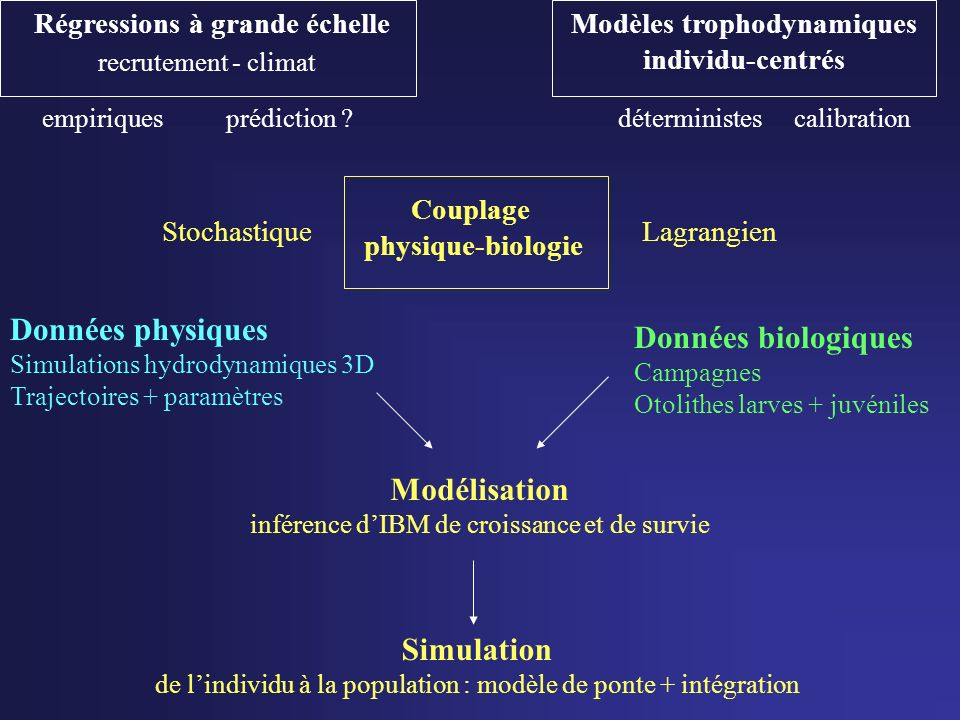 Modèles trophodynamiques