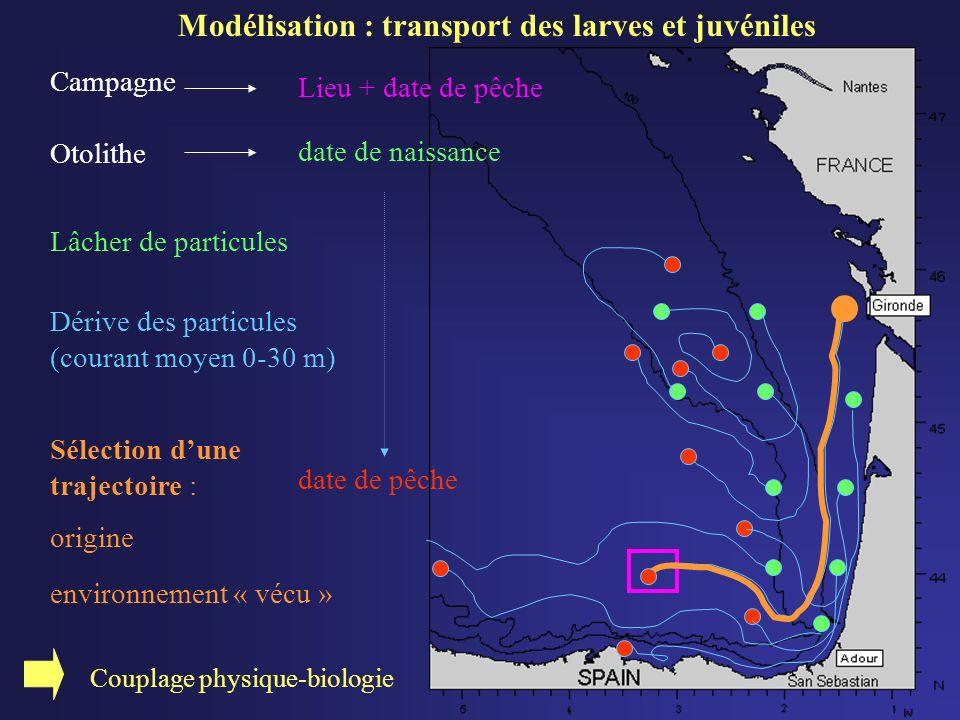 Modélisation : transport des larves et juvéniles