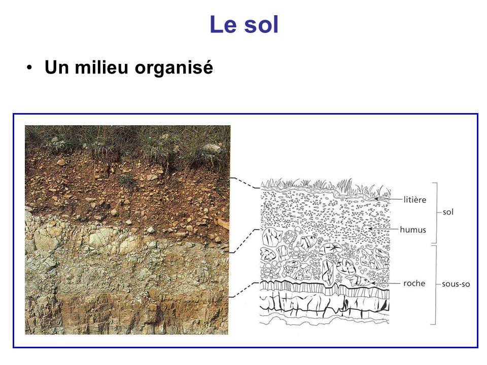 Le sol Un milieu organisé