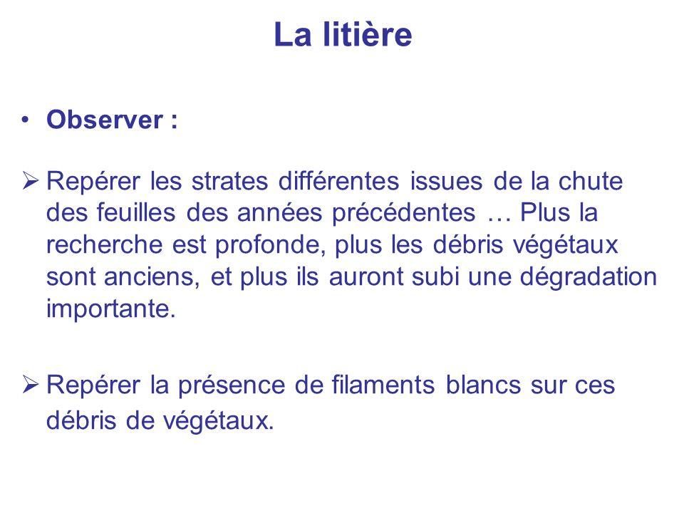 La litière Observer :