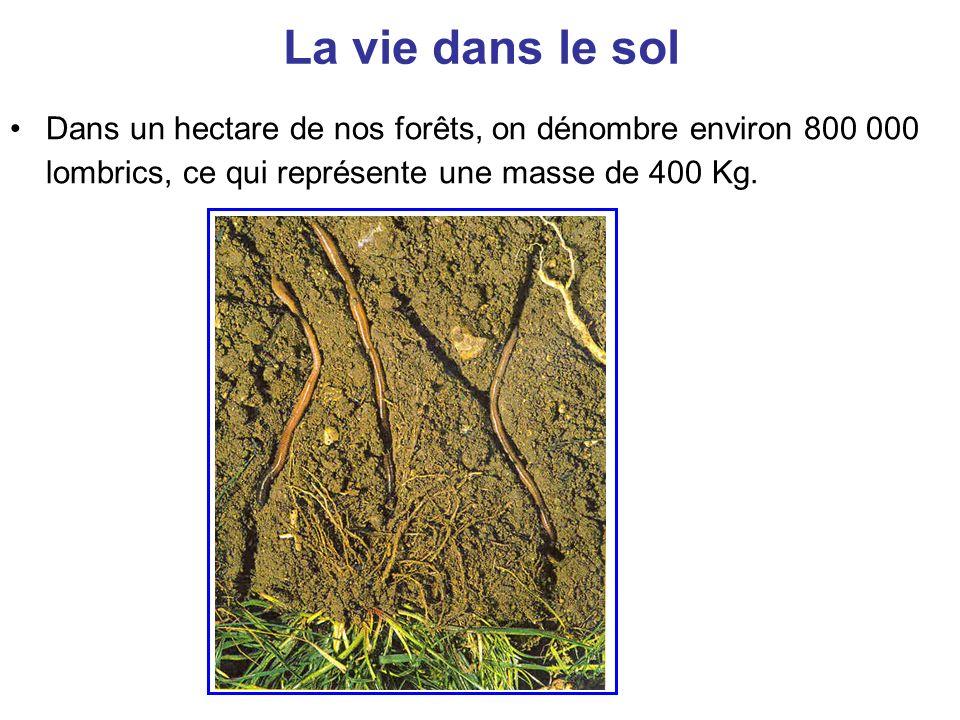 La vie dans le sol Dans un hectare de nos forêts, on dénombre environ 800 000 lombrics, ce qui représente une masse de 400 Kg.