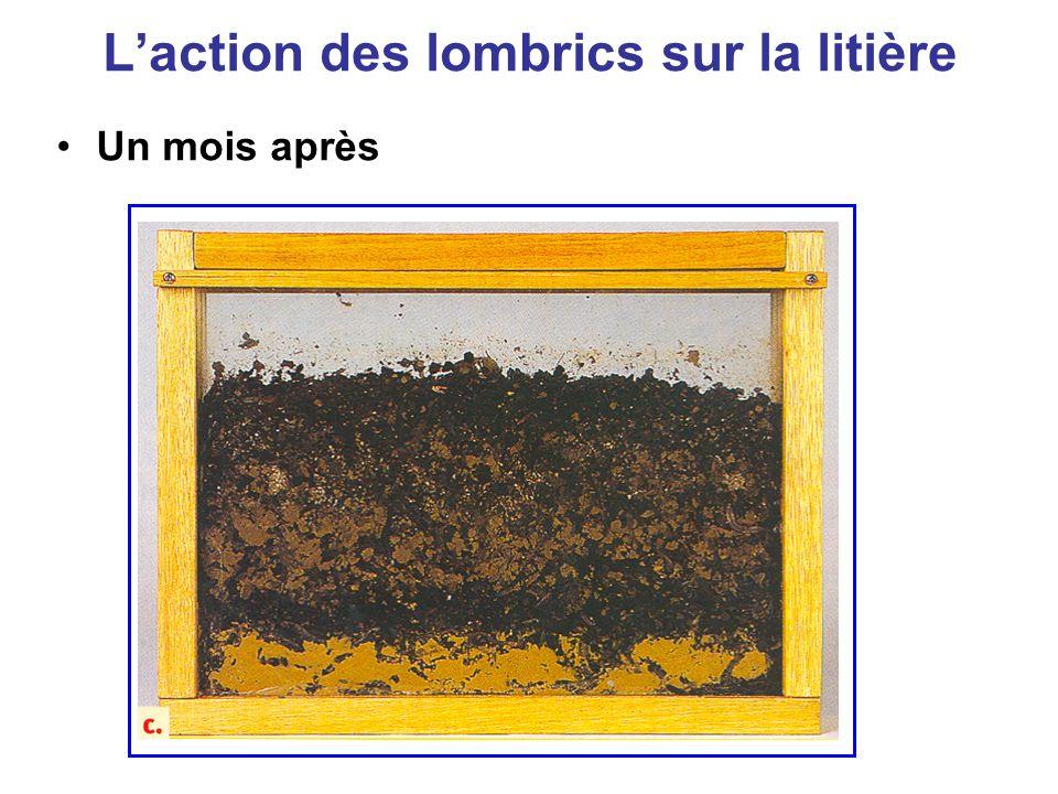 L'action des lombrics sur la litière
