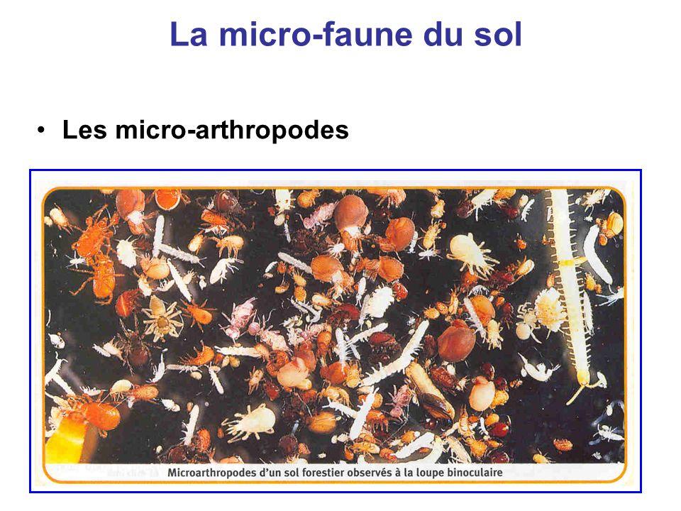 La micro-faune du sol Les micro-arthropodes