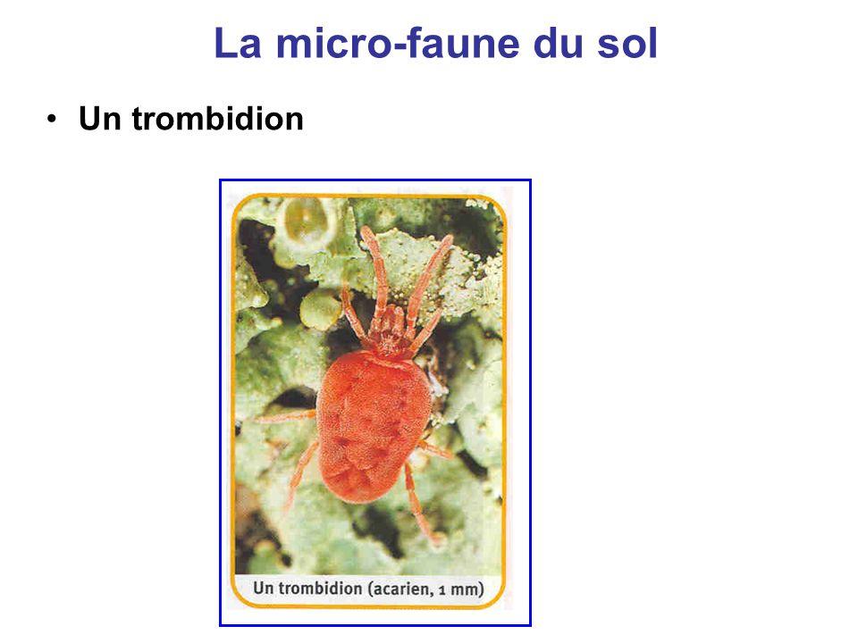 La micro-faune du sol Un trombidion