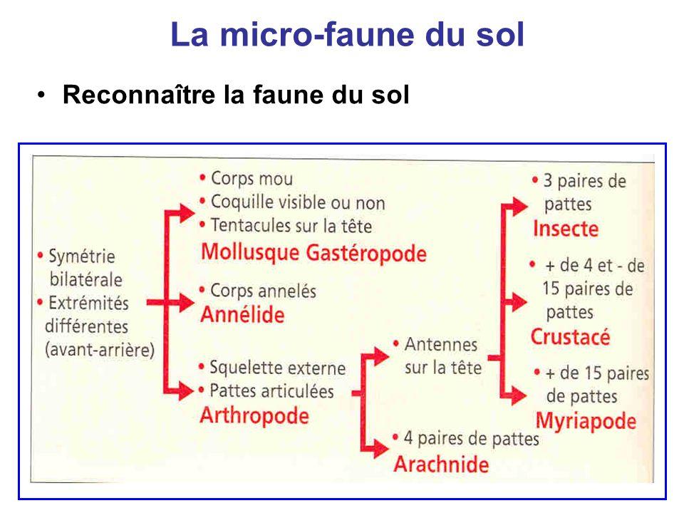 La micro-faune du sol Reconnaître la faune du sol