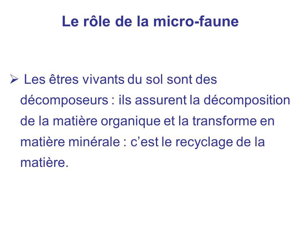 Le rôle de la micro-faune