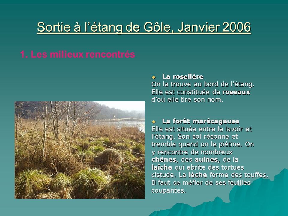 Sortie à l'étang de Gôle, Janvier 2006