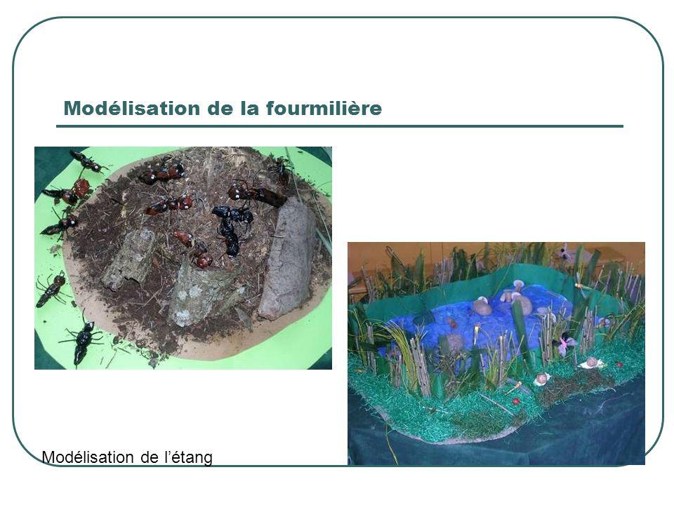 Modélisation de la fourmilière