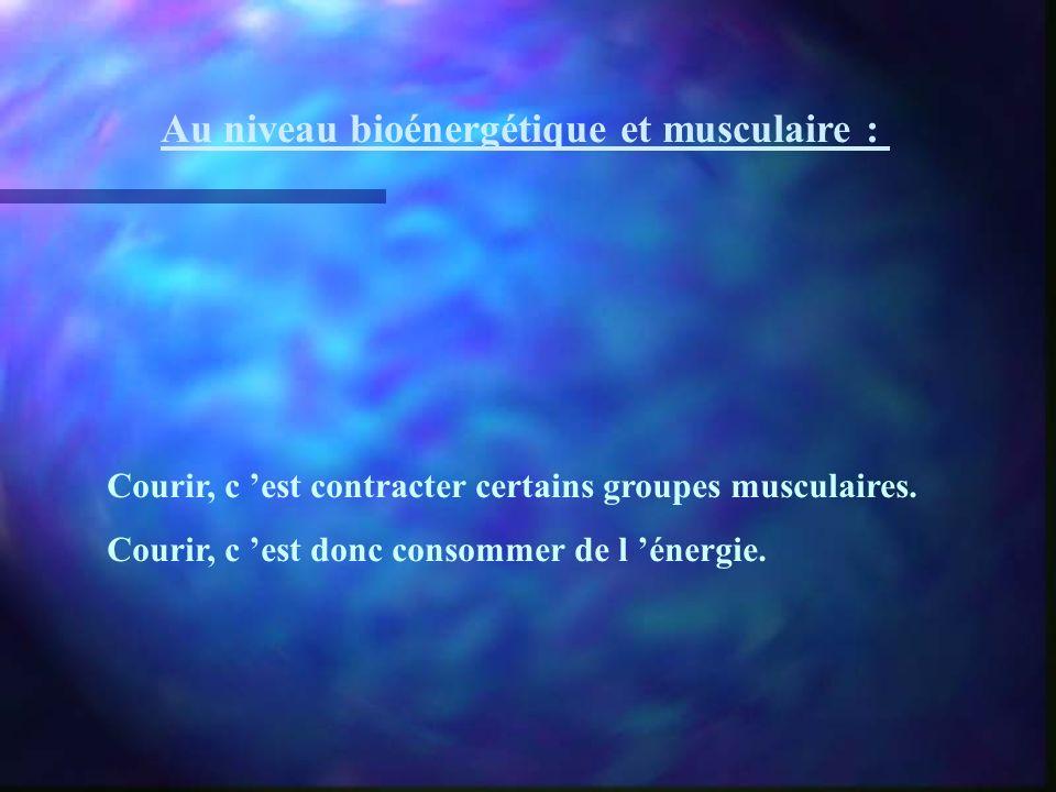 Au niveau bioénergétique et musculaire :