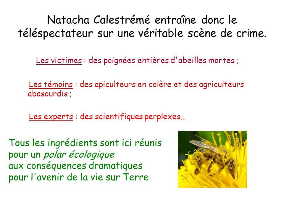 Les victimes : des poignées entières d abeilles mortes ;