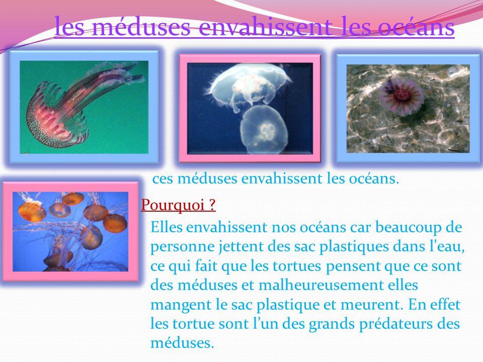 les méduses envahissent les océans
