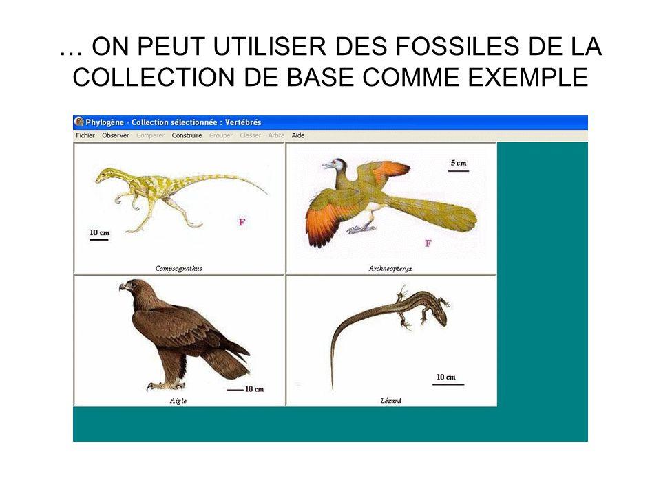 … ON PEUT UTILISER DES FOSSILES DE LA COLLECTION DE BASE COMME EXEMPLE